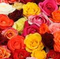 Статьи о розах.