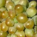 Виноград Бируинца