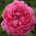 ���� ���������� ���� ����� ���� ���� Mary Rose
