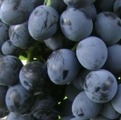 Фото винограда Молдова