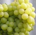 фото столового винограда сорта Сашенька VI-3 7-3