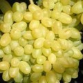 фото винограда Кишмиш Столетие