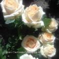 фото розы Osiana. Осиана